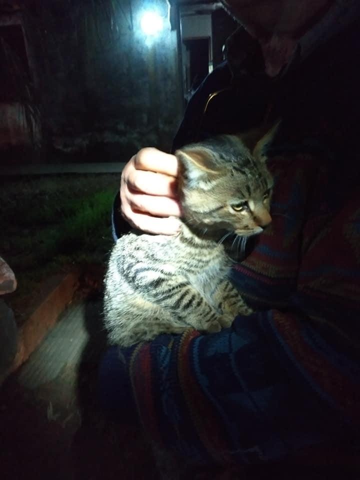 Rescate de felino