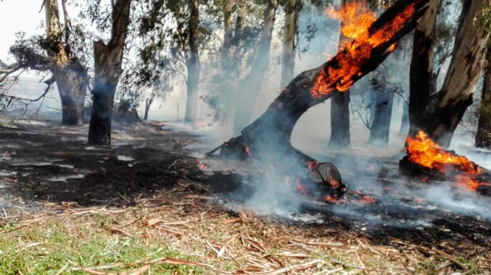 Incendio rural en propiedad de Robles